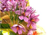 zaferan-fleur
