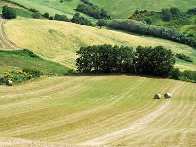 countryside-of-Molise