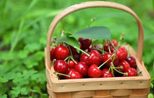 Cherries-Abruzzo