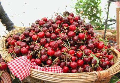 Cherries-Canosa-Sannita