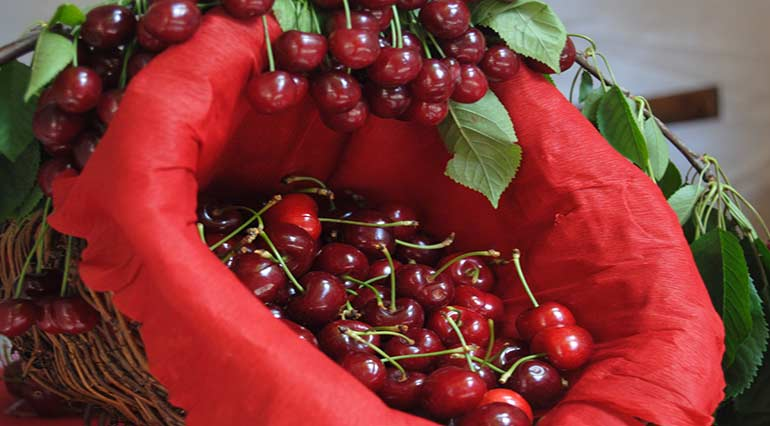 Raiano and Giuliano Teatino Cherries