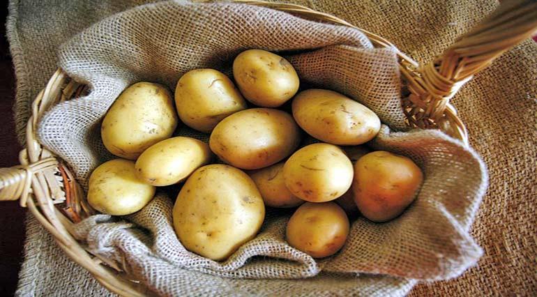 Middle Sangro Valley Potato (Patana muntagnola)