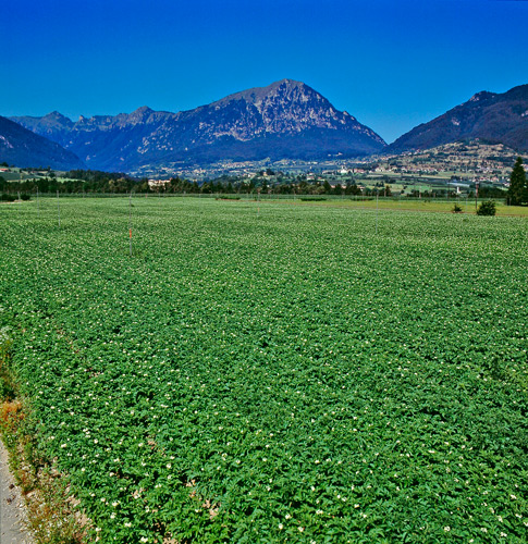 Sangro-Valley-Potato