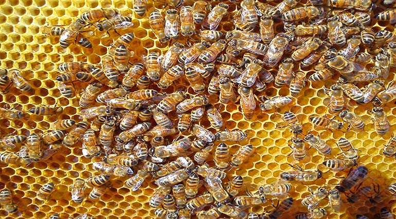 The phases of the honey – Beekeeping Bees