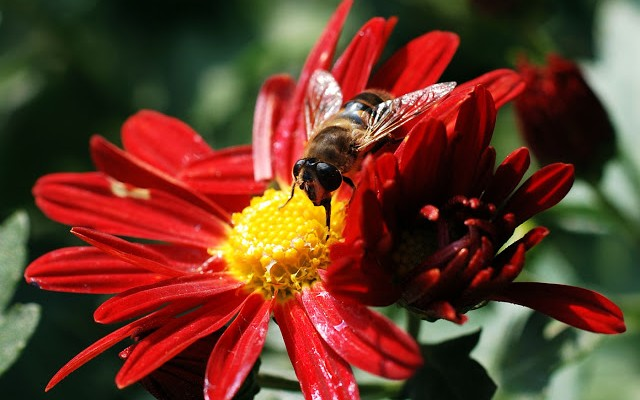 bee-insect