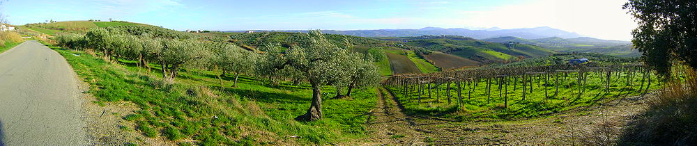 casoli-olive groves
