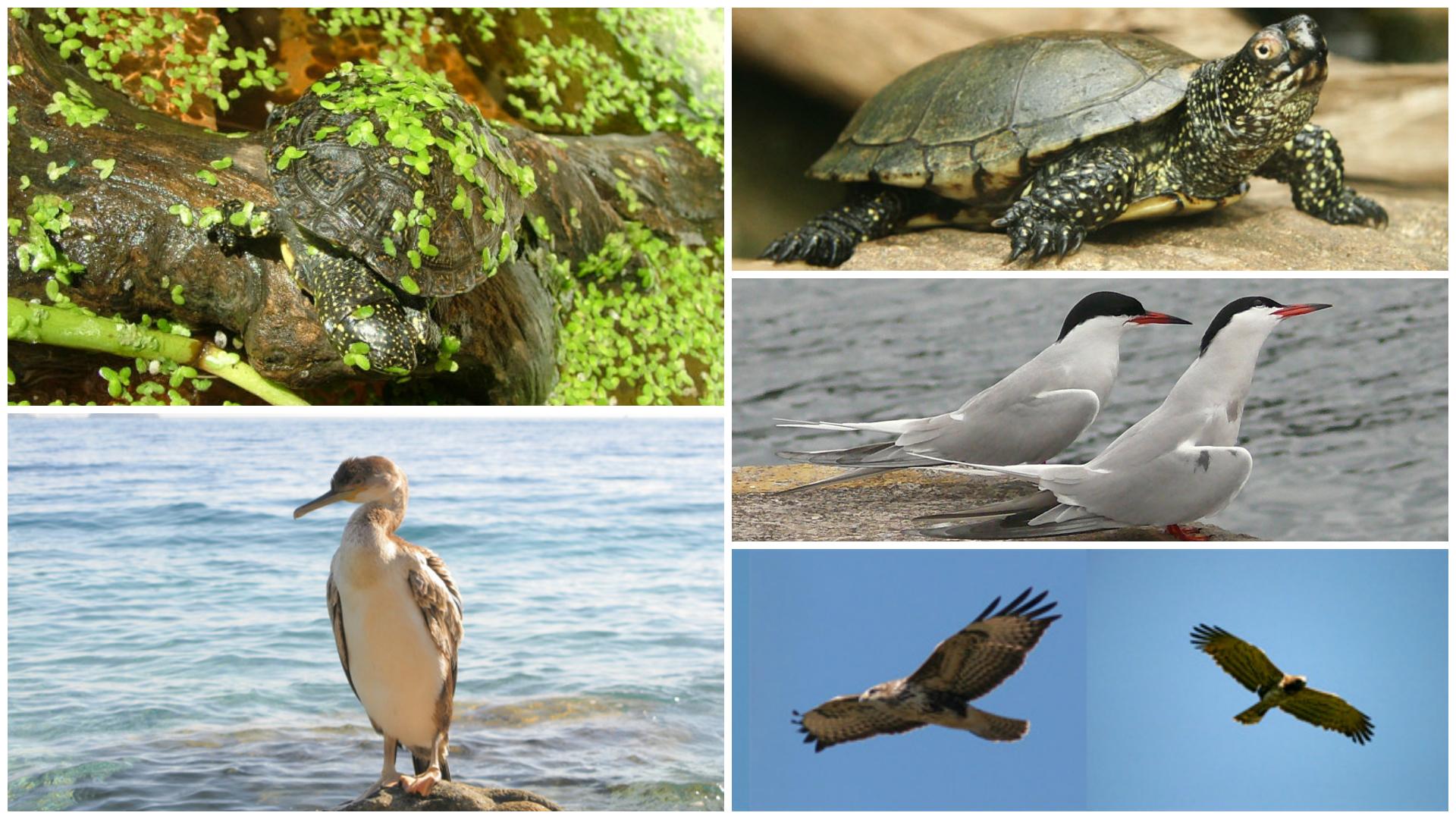 Osento- to -reserve- Punta- Aderci