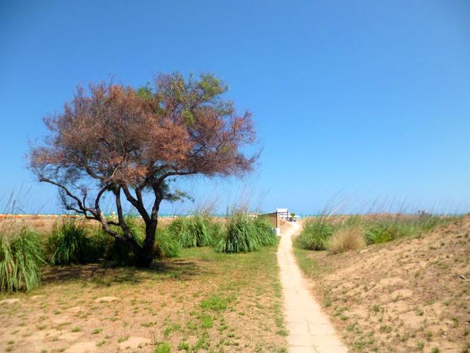 botanical-garden-Mediterranean