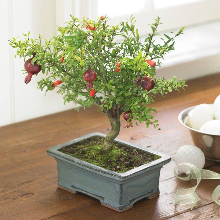 pomegranate-bonsai